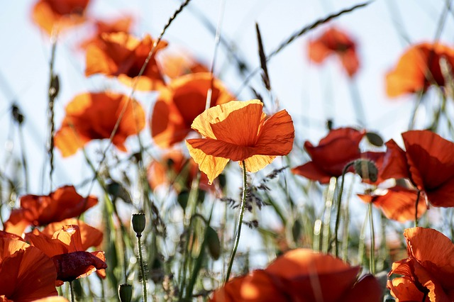 Flores vermelhoelaranja