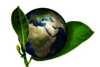 Terra planta